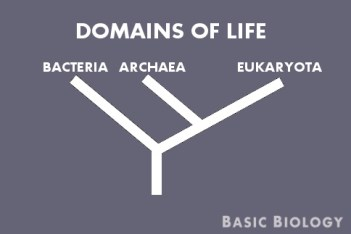 Tree of life - domains
