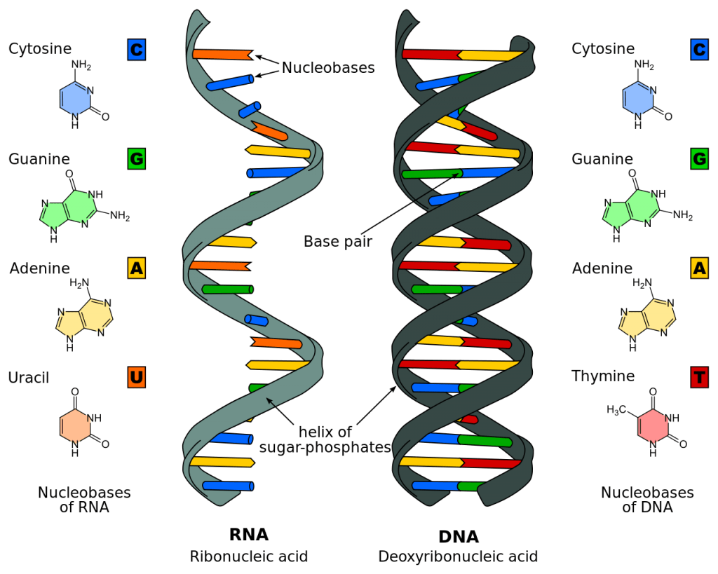 hight resolution of dna genes genetics