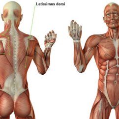 Pull Up Muscles Worked Diagram Hyundai Wiring Diagrams Ups Vs Chin Which One Is Better What Builds More Muscle Arm And Back During