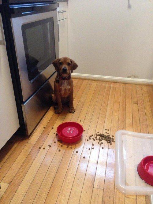 What Happens When A Dog Eats Cat Poop