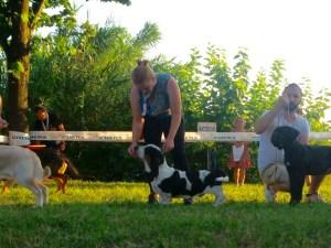 expo-canina-santangelo-niki in ring best in show