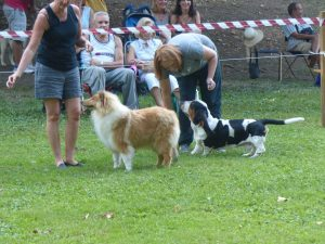 Expo canina Parco Costabissara (VI)-basset-collie