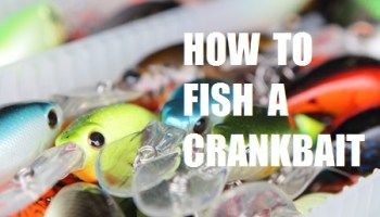 Best Crankbait Rod For Bass Anglers -Ultimate Guide(Updated