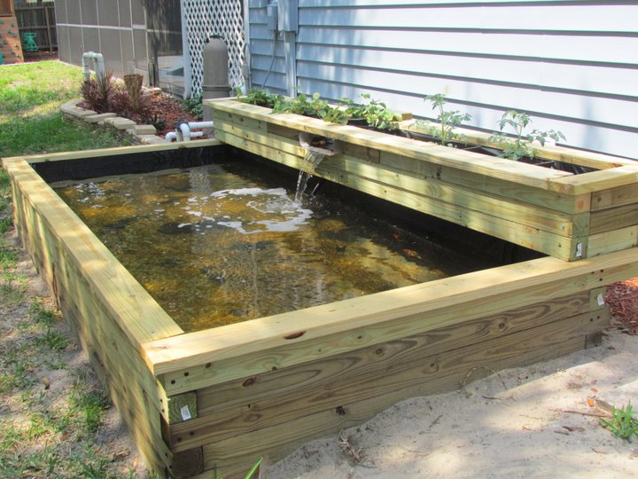Small Raised Pond Ideas