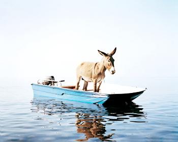 Šta mi je donelo blogovanje – da li ima koristi od bloga i blogovanja Magarac u čamcu