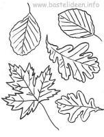 Bastelvorlagen   Bastelvorlage Herbstblaetter Herbstlaub