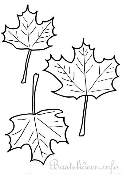 Bastelvorlage Ausmalbild oder Malvorlage - Ahornblätter 2