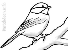 Kohlmeise Vogel Malvorlage / Ausmalbild