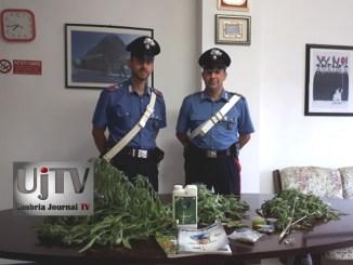 Scoperti a Bastia Umbra mentre innaffiavano tre piante di marijuana, due giovani nei guai