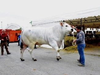 Agriumbria 50 anni dedicati alla agrizootecnia, grande festa di popolo