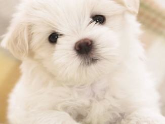 Compra cucciolo online paga 200 euro è un truffa né cane e né venditore