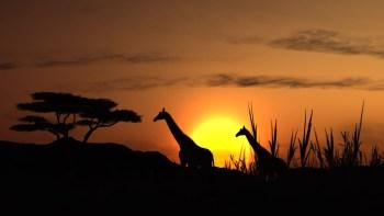 Africa-tourism