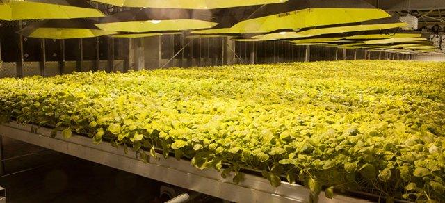 Kentucky BioProcessing
