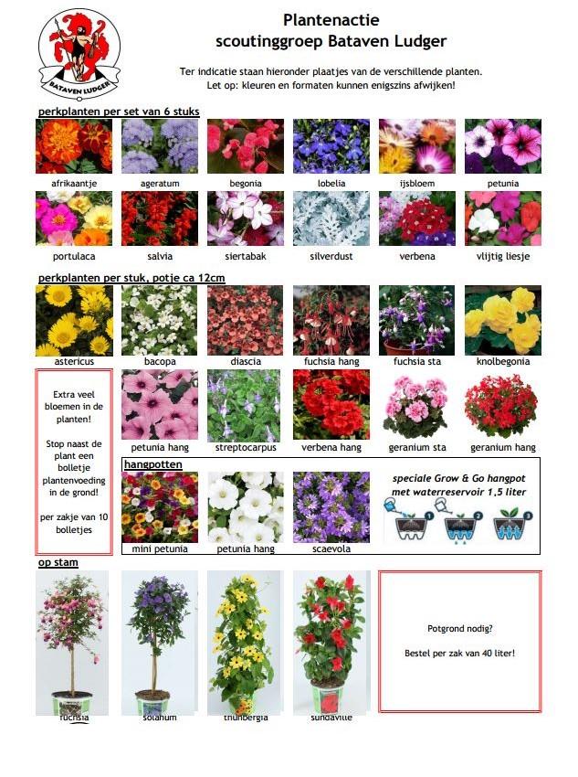 Klik hier voor het fotoblad met alle planten