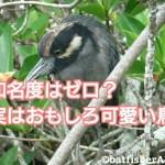 知名度はゼロ?実はおもしろ可愛い鳥