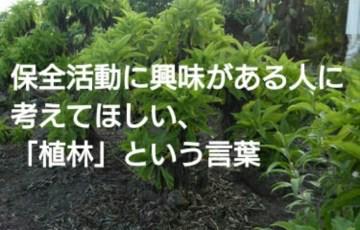 保全活動に興味がある人に考えてほしい、「植林」という言葉 アイキャッチ