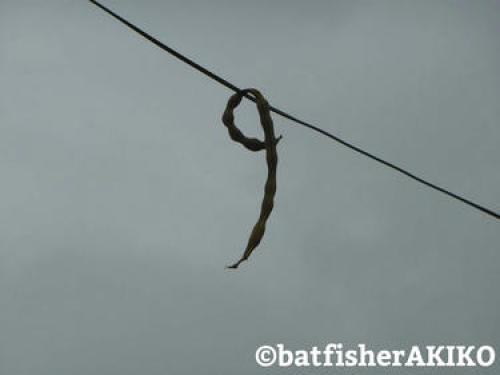 電線から吊り下がる何か 拡