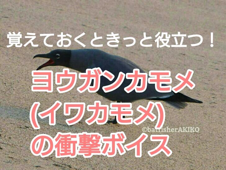ヨウガンカモメ(イワカモメ)の衝撃ボイス アイキャッチ
