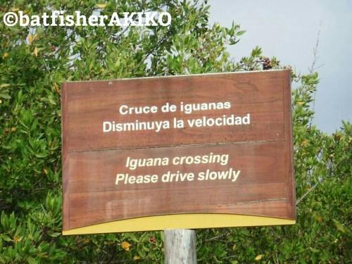 ガラパゴス諸島、イサべラ島で見つけたイグアナ注意看板