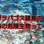 ガラパゴス諸島の海の危険生物って? アイキャッチ