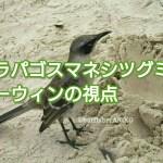 ガラパゴスマネシツグミとダーウィンの視点 アイキャッチ