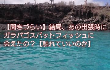 【聞きづらい】結局、あの出張時にガラパゴスバットフィッシュに会えたの?【触れていいのか】 アイキャッチ