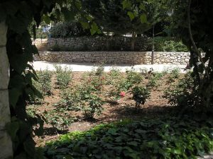 ורדים לגינה, שינויים, גיזומים והערות חדשות.