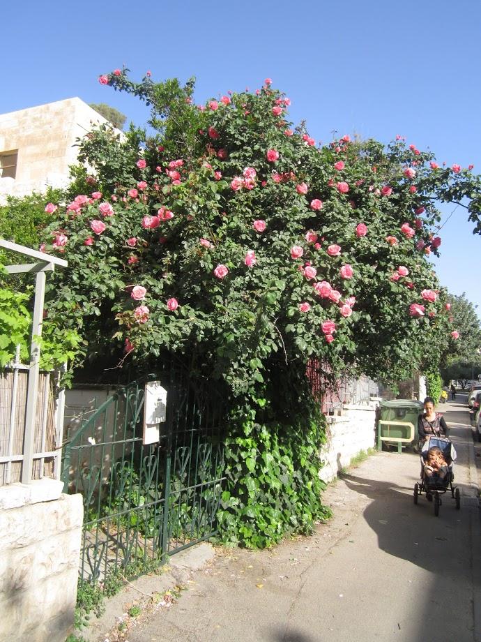 תפאורה של אליס בארץ הפלאות, ורד-עץ, בולמיה של פריחה.