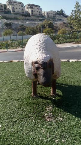 לא יגמר לה מה ללחך כבשה מבטון על דשא סנתטי