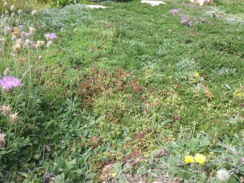 מרץ מדשאת אחו