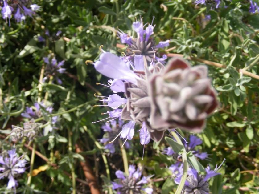 מראה קיץ מעט דליל לעיתים - אך שווה כל רגע באביב - מרוות קליבלנד