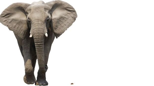נפח פנים ביחס לפני השטח, פיל ועכבר (למטה מימין)