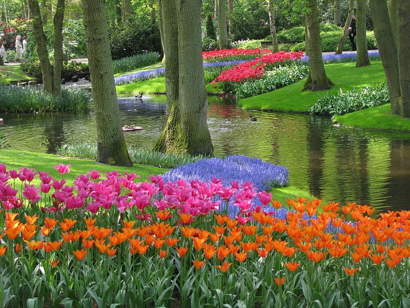 צבעונים בהולנד, מתחרה באינפנטיליות רק בגני וורסאי