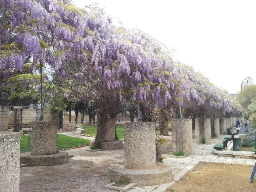 ויסטריה בהיסטריה - גן הפעמון מראה מבחוץ