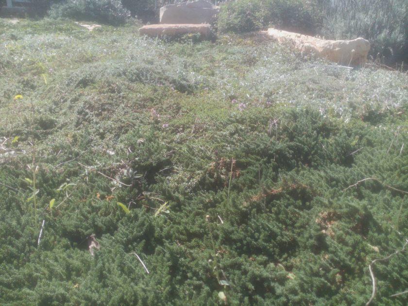 בשינוי מתמיד, סתיו במדשאת האחו