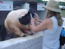 Friendly-Pig-and-Anne-McCreath