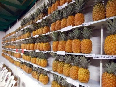 Wall of Pineapples