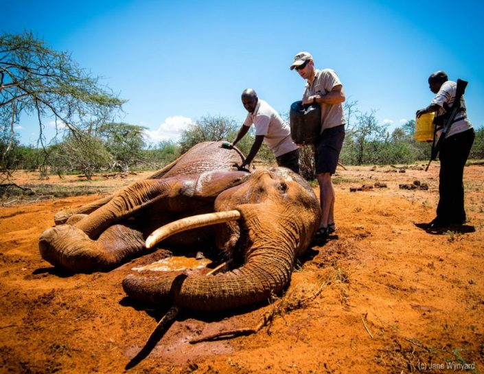 a dying elephant