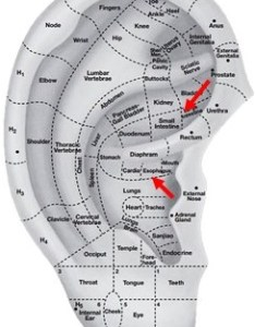 See photo below the two red arrows point to area where dr booth mentions in his above quote chinese ear acupuncture chart also daith piercing battlefield seminars rh battlefieldacupuncture