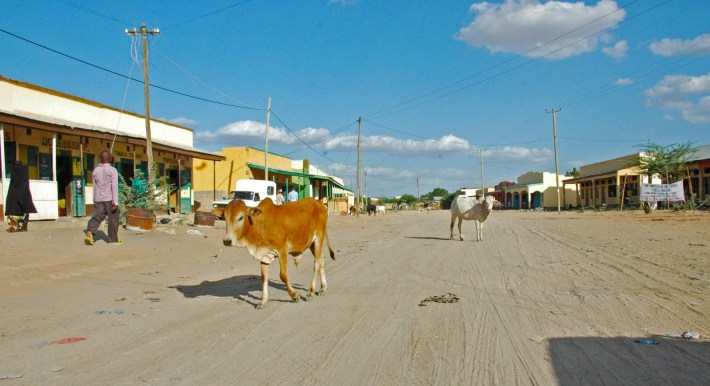 Garissa - Cows in the main streets