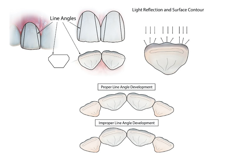 Line angles of anterior teeth
