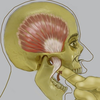 Palpation of temporalis muscle