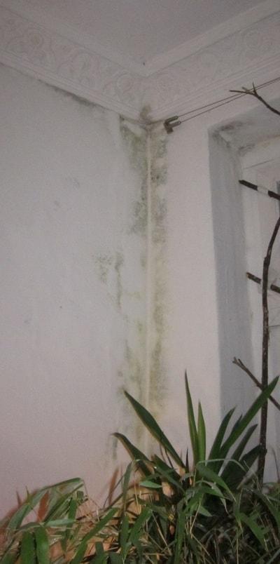 Mietminderung wegen Bausubstanz bedingter Schimmelbildung Schimmelpilzen Schimmelpilz in Wohnungen Schimmel alle Zimmer