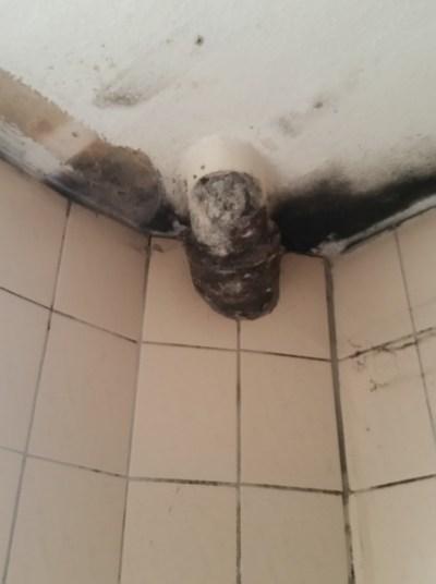 Schimmel an der Decke im Bad