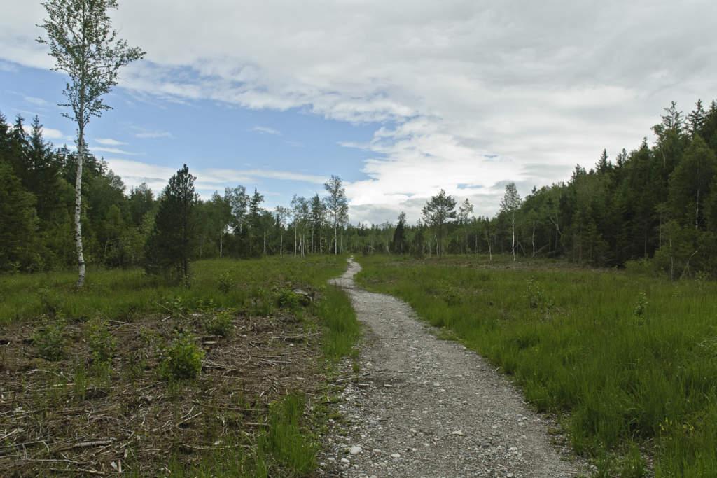 Weg durch den Moorwald