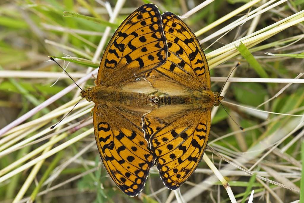 Schmetterlinge schreiben Schmetterlingsgeschichten