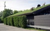Gründach mit Ziegen und Schafen