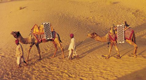 Kamele mit Solarzelle auf dem Rücken