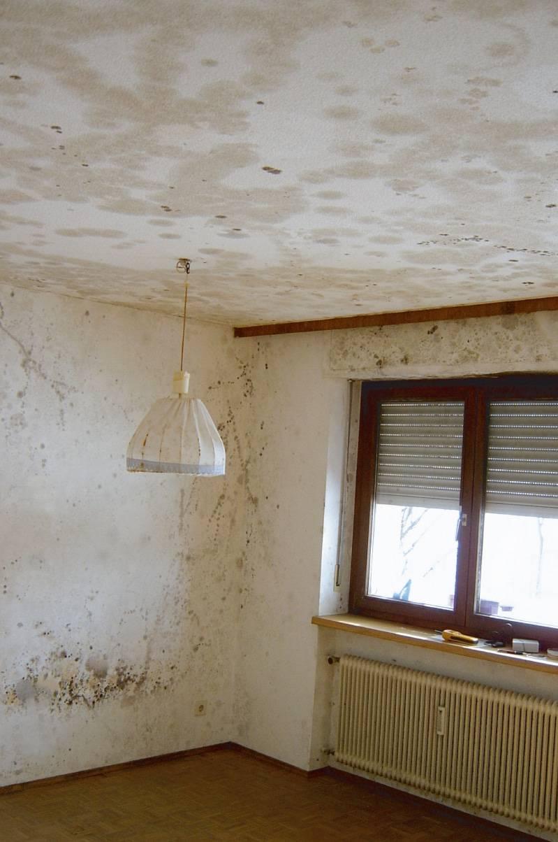 Schimmel in einer Wohnung in Lehrte Region Hannover