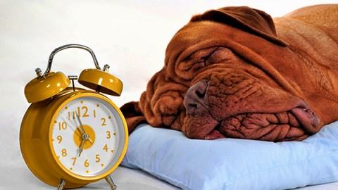 cani sanno misurare il tempo